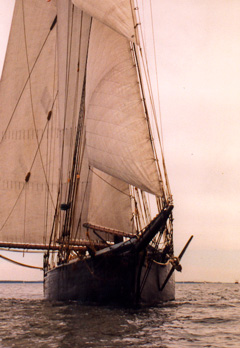 This photo is from the Ernestina website. I can't take gredit for this!