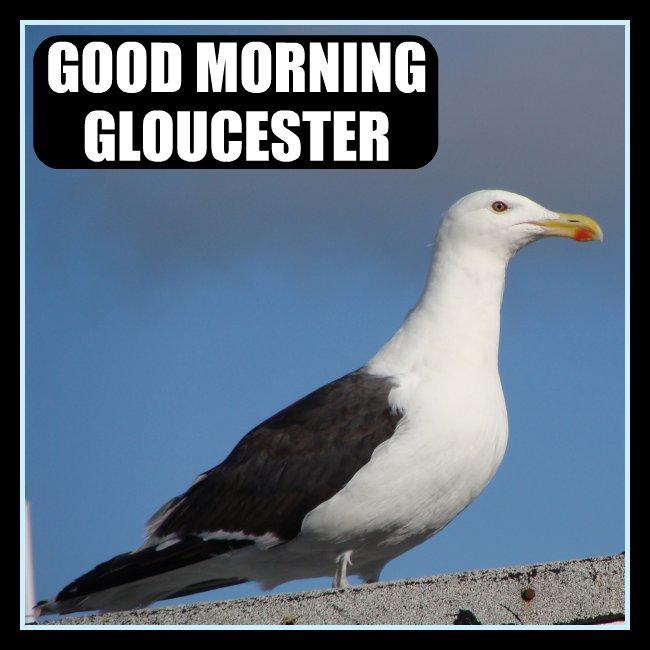 Good Morning Gloucester