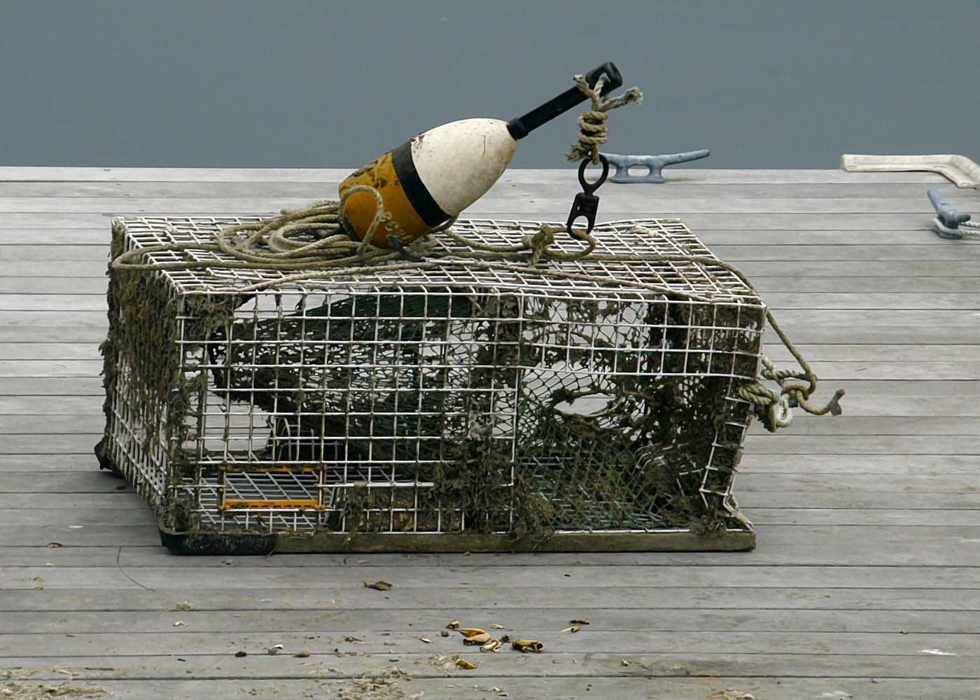 Did You Know (Lobster Traps) | GoodMorningGloucester