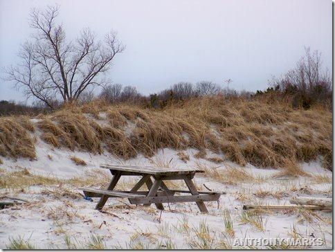 dining in the dunes at Wingaresheek beach