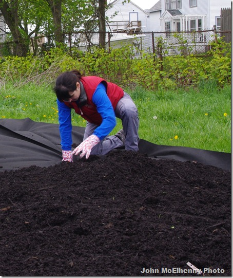 Community garden - Gina Curcuru