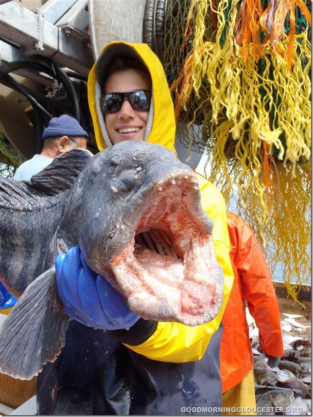 GMRI Intern, Will, with wolffish