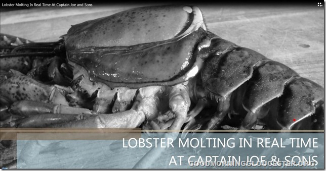 lobstermolting