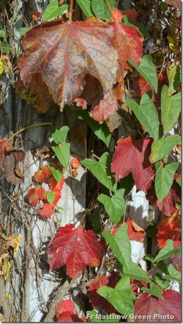 _Autumn leaves 2