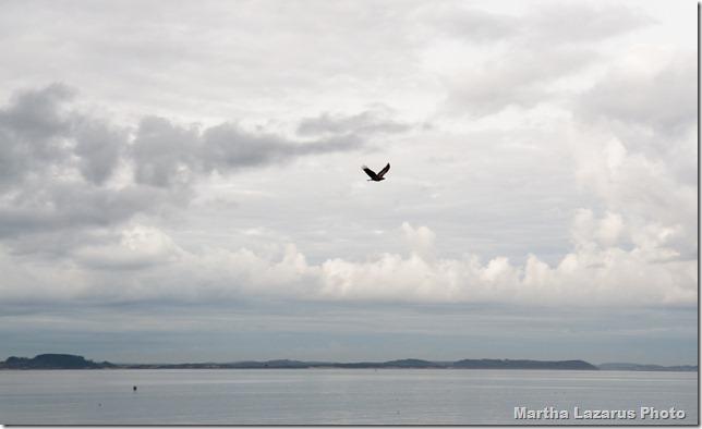 bird, Lane's Cove