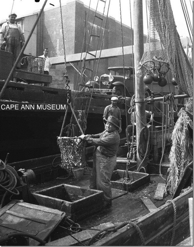 taking out a trip of whiting at the state fish pier.  1943.  sherm wilhelm photo.