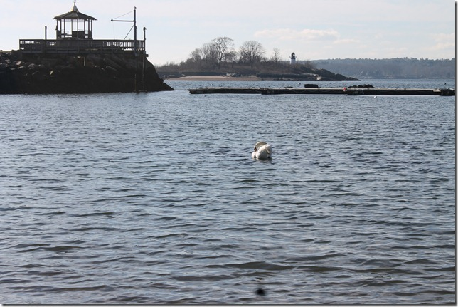 Even the Swan enjoyed the plunge