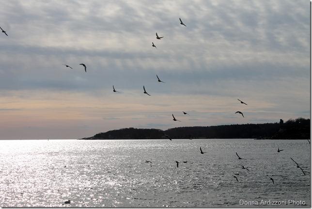 Flocks of Gulls over the Harbor