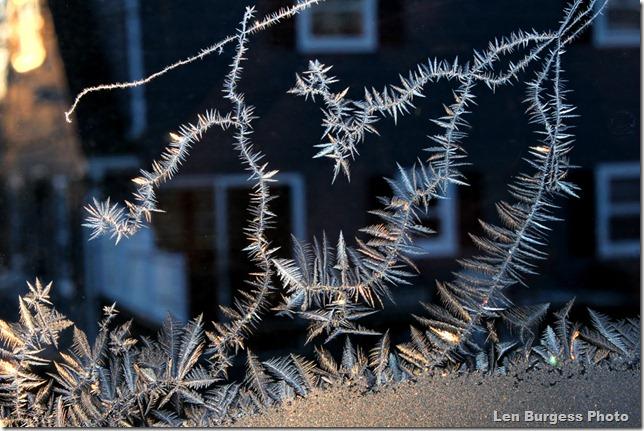 IceCrystals _0296