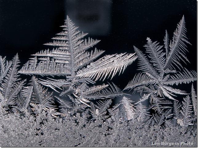 IceCrystals _0981
