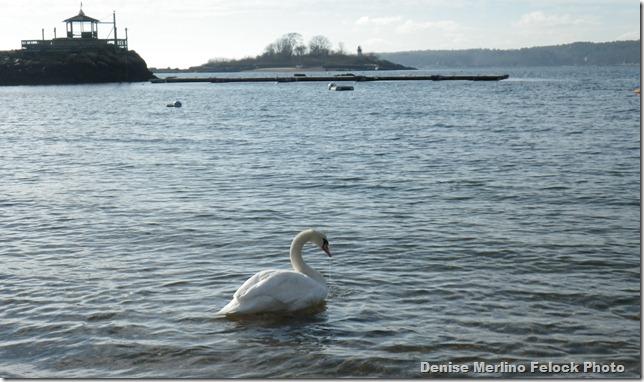 Swan plus Gabizo-IMGP0170