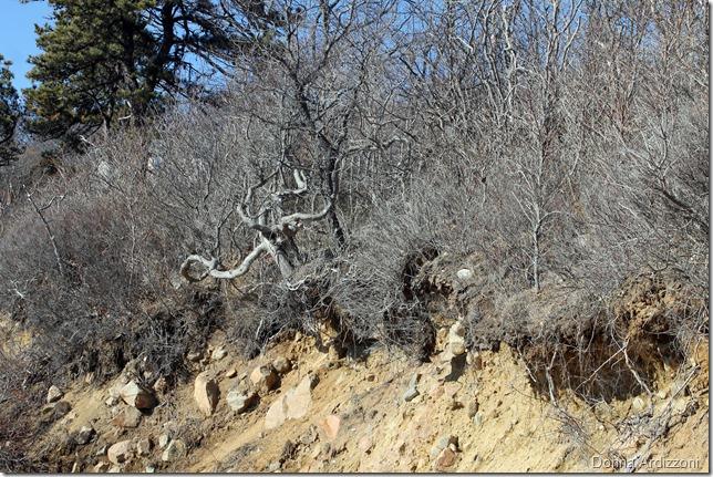February 20, 2012 tree of Rafe