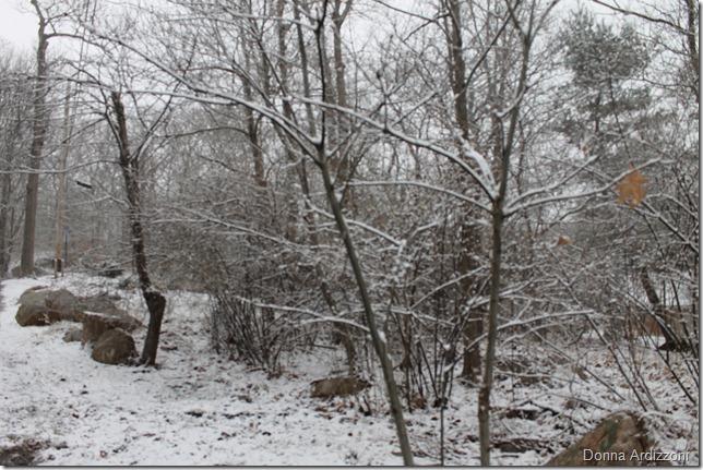 February 29, 2012 snow 006