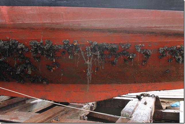 Sea life on the hull