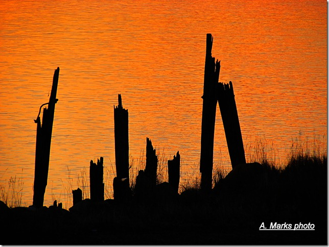Pilings by the shore