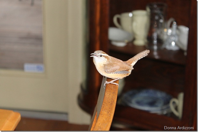 March 25, 2012 hanging on the dining room chair