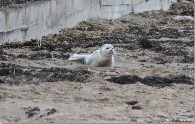 March 29, 2012 a baby seal behind Birdseye