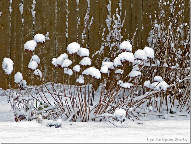 SnowFlowers_1486