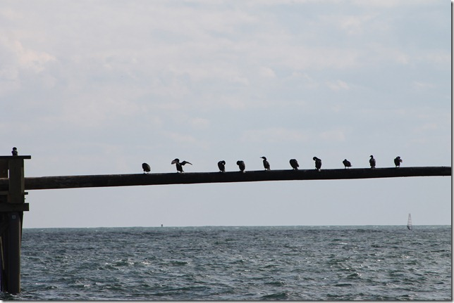 April 24, 2012 greasy pole commarants