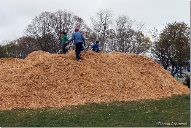 May 2, 2012 playing in the mulch pile