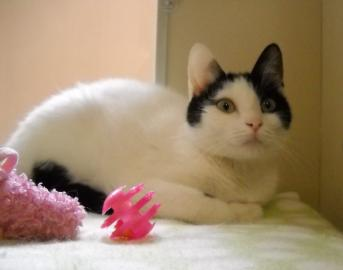 Pet of the week, cape ann animal aid, seabreeze