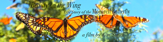 Monarch Butterfly Film  Banner small .jpg