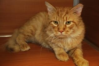bradford pet of the week, cape ann animal aid