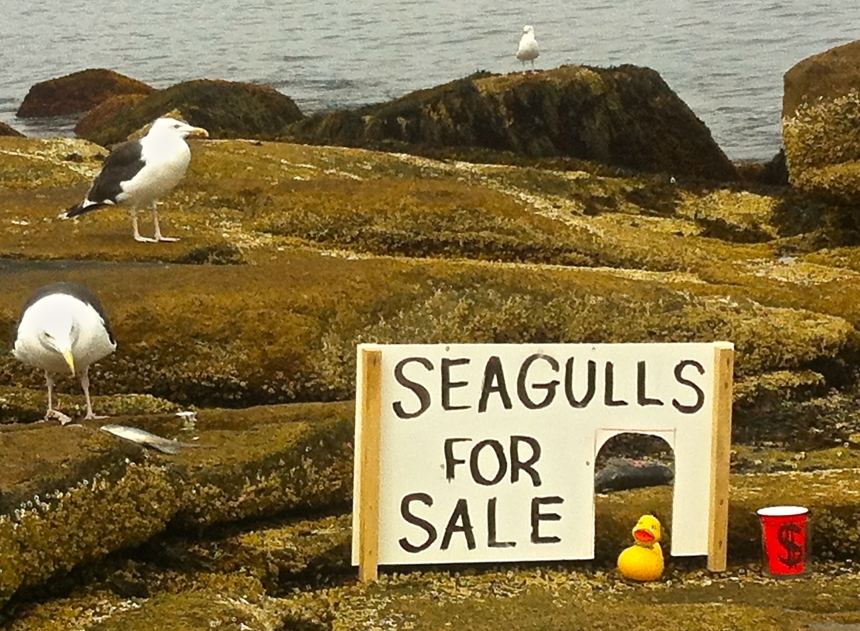 Seagulls for Sale