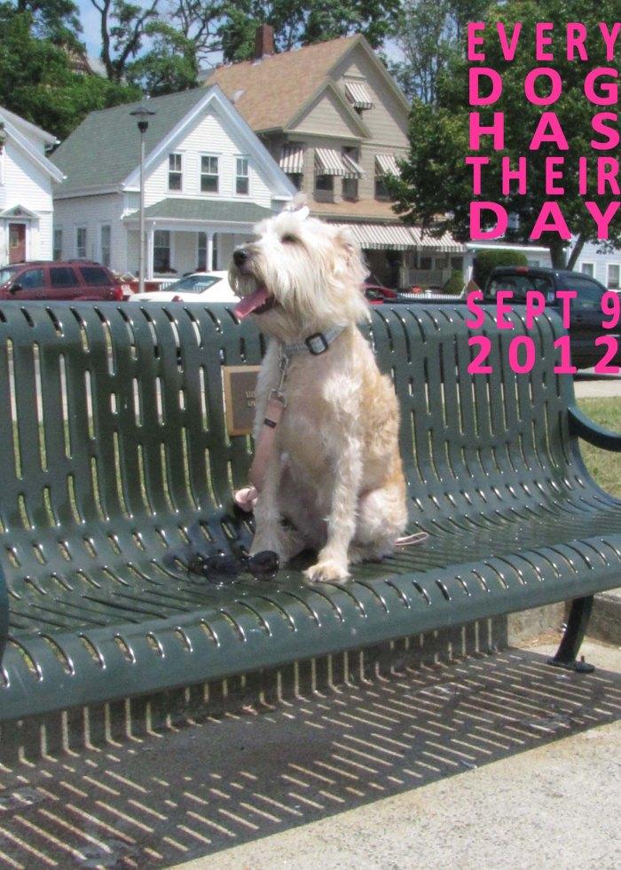 Dog Day, Cape Ann Animal Aid, Sept 9th