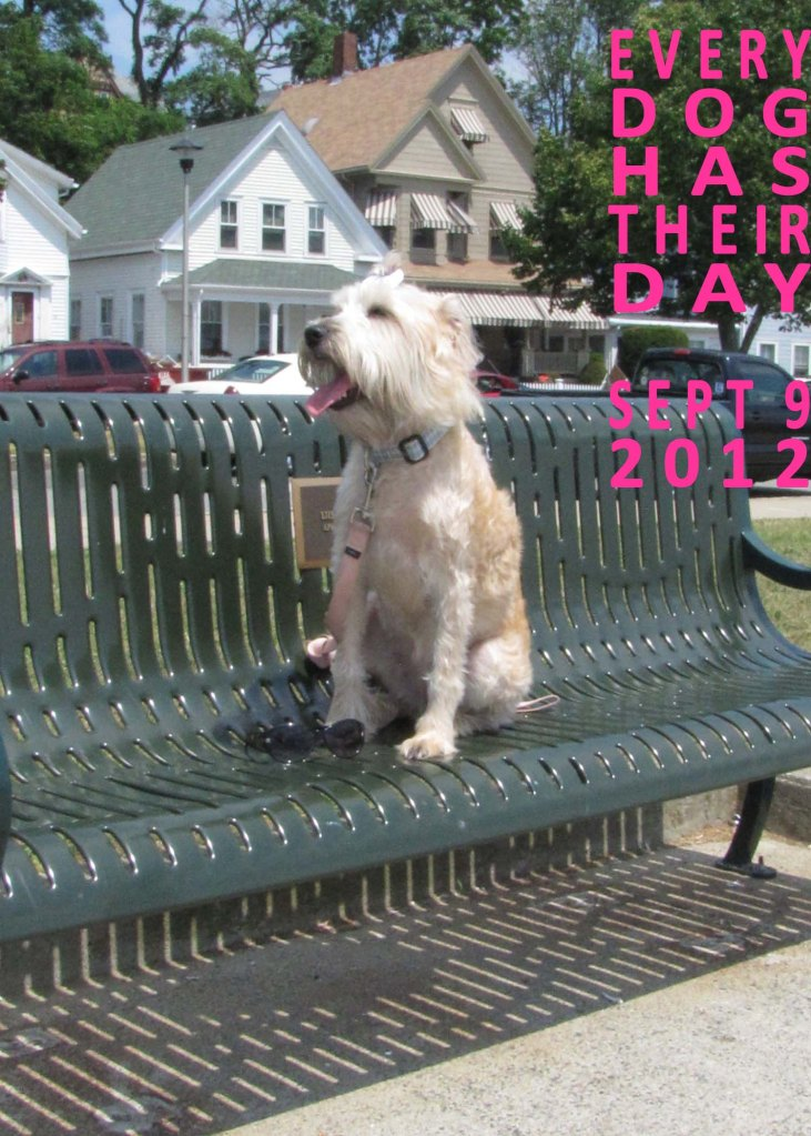 Dog Day, Cape Ann Animal Aid, Sept 9th