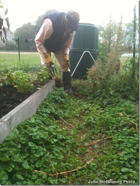 Garden photo - Barbara Collins 9.22.2012