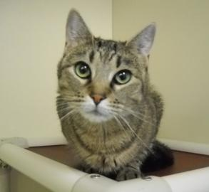 pet of the week, cape ann animal aid