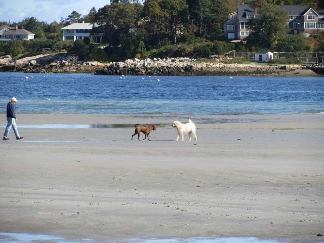 wingaersheek beach, dogs