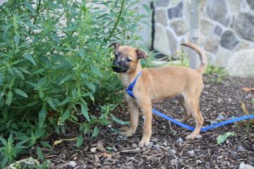 pet of the week, Loki, Cape Ann Animal Aid