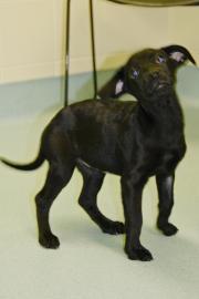 pet of the week, mayari, cape ann animal aid