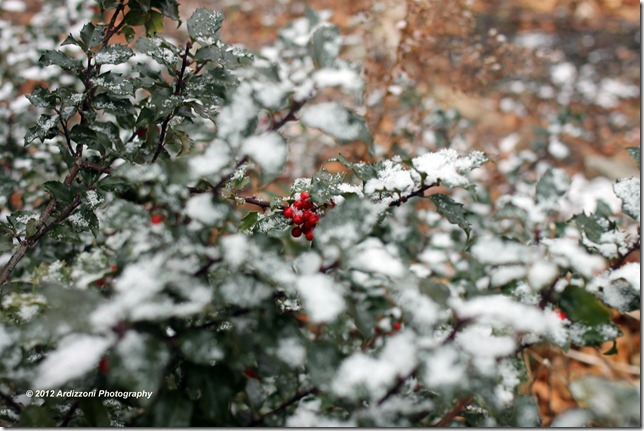 December 1, 2012 snow on the wreath with red berries