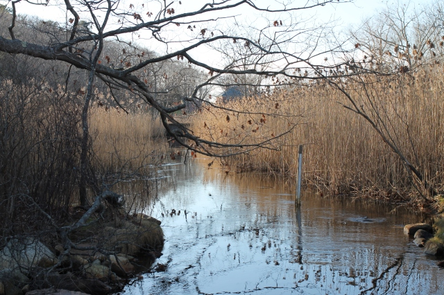 December 13, 2012 The calmness of Clark Pond