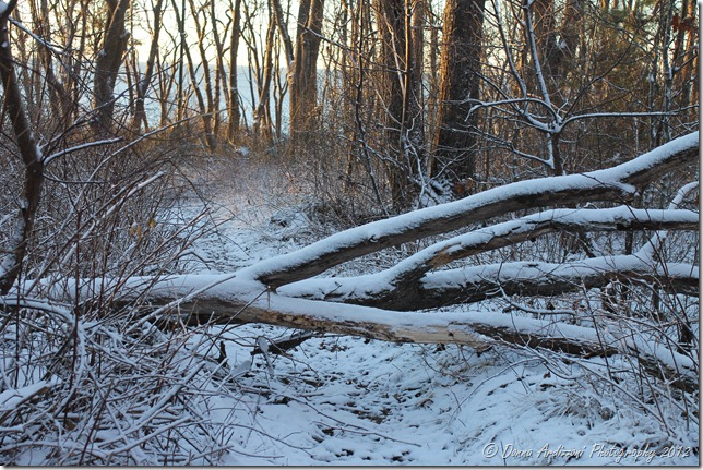 December 28, 2012 If a tree falls in the woods