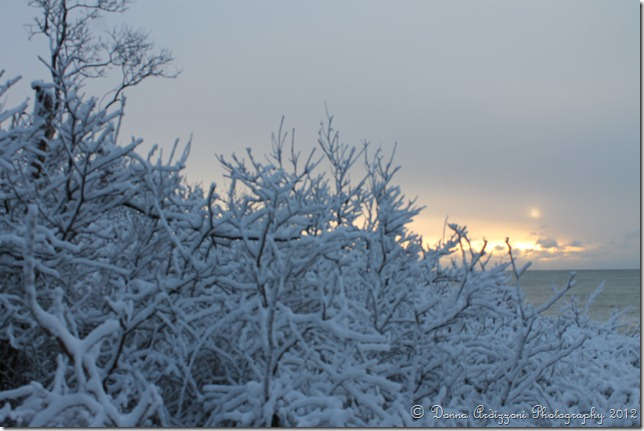 December 30, 2012 Winter wonderland
