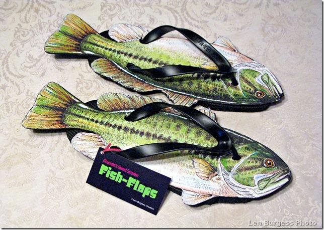 FishFlops_4788