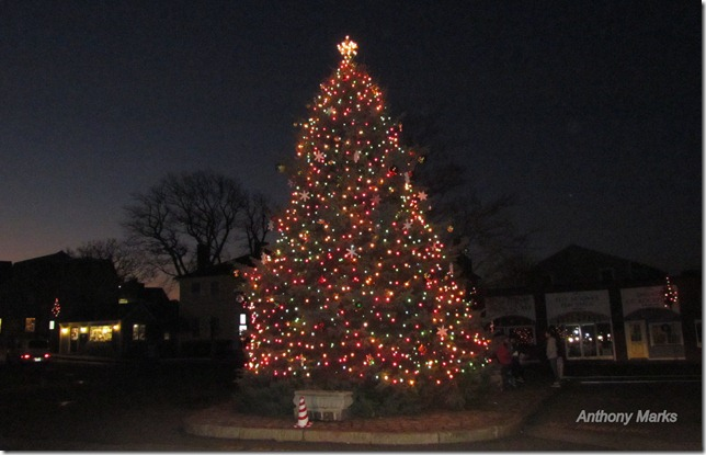 Dock Square Christmas Tree Rockport Ma.