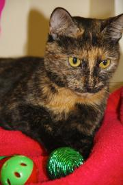 kitty, pet of the week