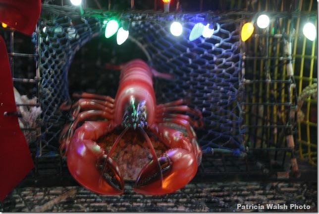 lobster tree
