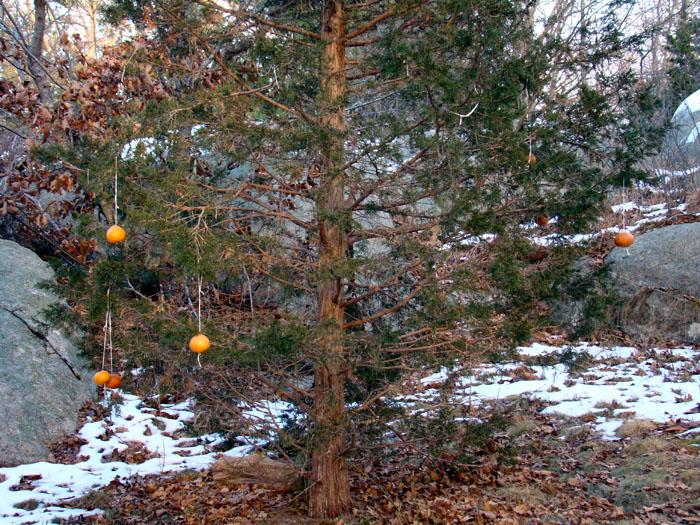 biodegradable ornaments