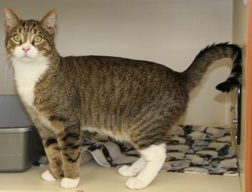 pet of the week, cody, cat