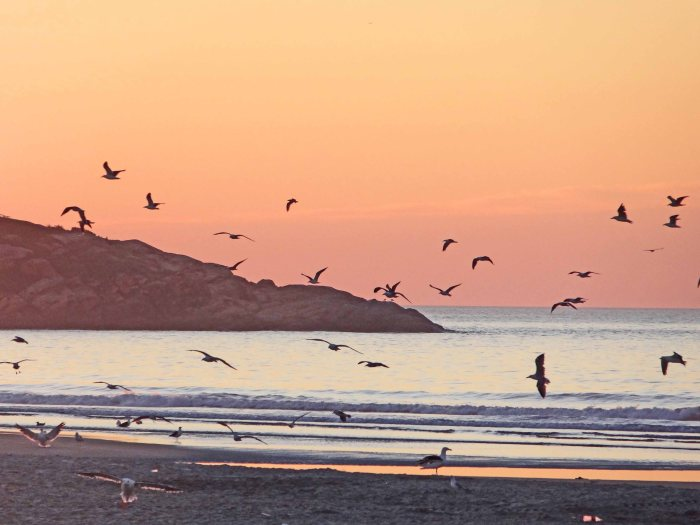 A flock of gulls at sunrise.