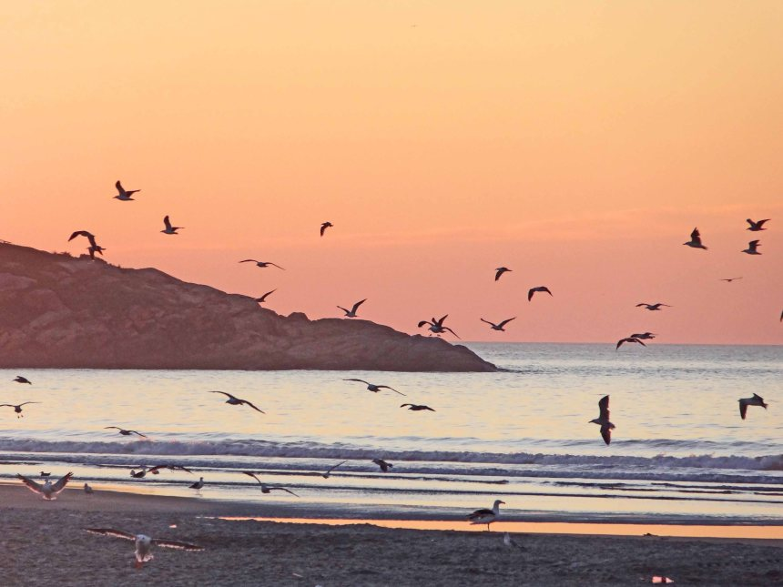 A flock of gulls at sunrise.