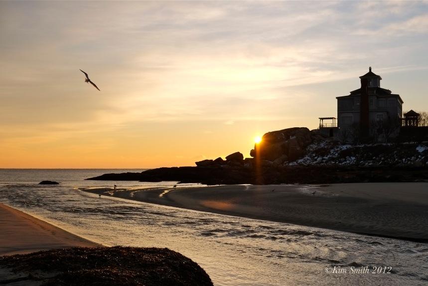 Gloucester Seagull  ©Kim Smith 2013-2