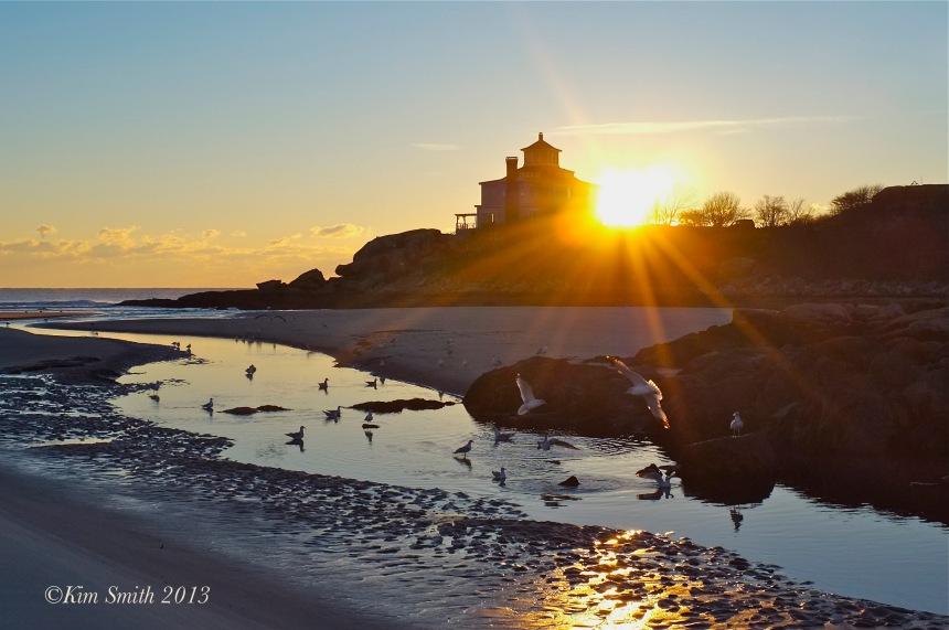 Good Harbor Beach Seagulls ©KIm Smith 2013