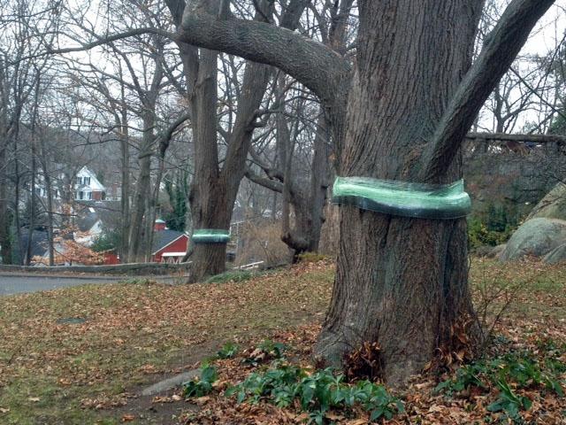 hoolahoop trees